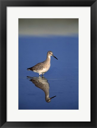 Framed Bird with Reflection in Water Print