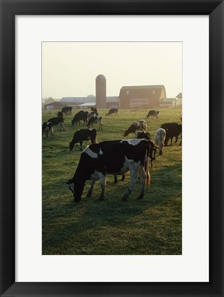 Framed Cows Grazing Near Barn Print