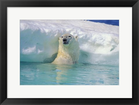 Framed Polar Bear Near Chunk of Ice Print