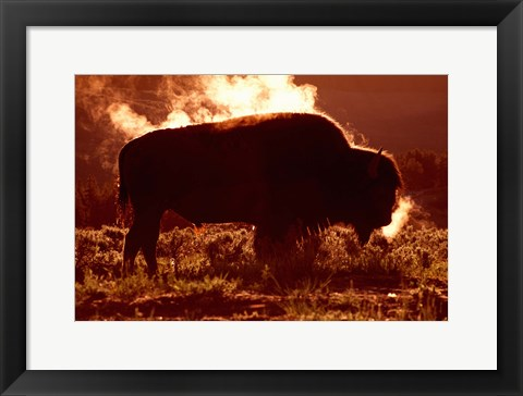 Framed Bison Against Fiery Red Horizon Print