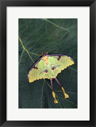 Framed Butterfly Against Leaf Print
