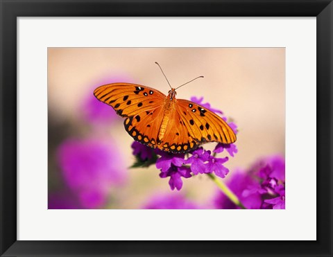 Framed Bright Orange Butterfly Print