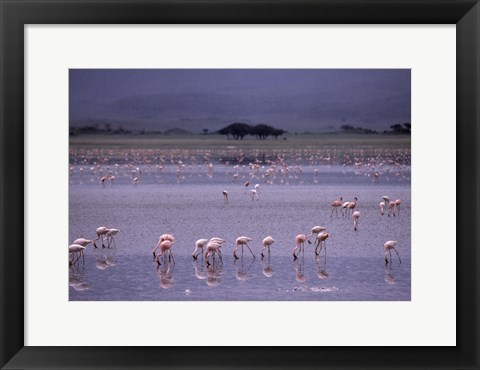 Framed Flock of Flamingos Print