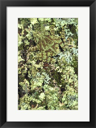 Framed Green and Brown Frog Camouflaged Print