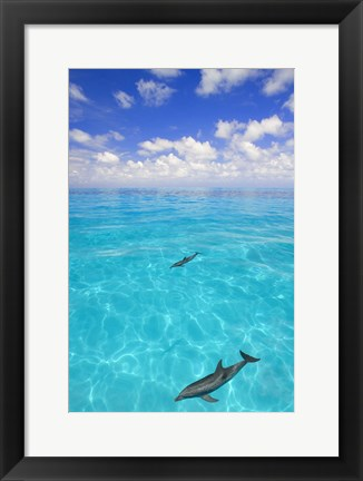 Framed Two Dolphins Swimming in Crystal Waters Print