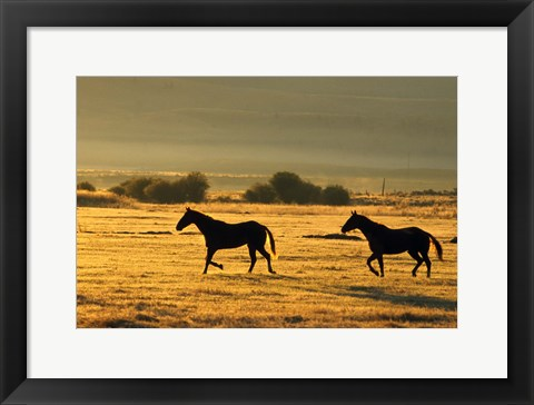 Framed Horses Running at Sunset Print