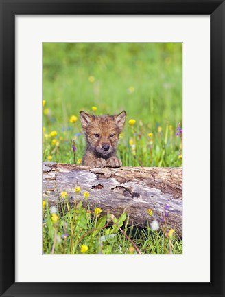 Framed Little Brown Puppy in Field Print