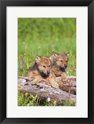 Framed Two Brown Puppies in Field Print
