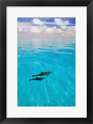 Framed Two Grey Dolphins in Blue Waters Print