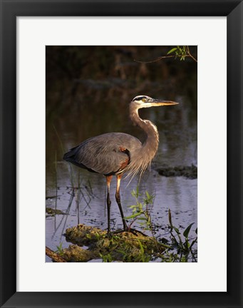 Framed Heron in Lake Print