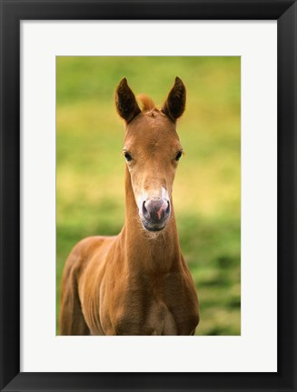 Framed Baby Calf in Grass Print