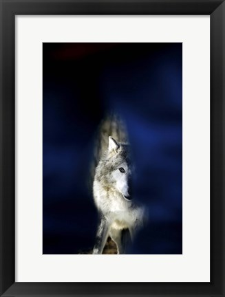 Framed Wolf against a Blue Background Print