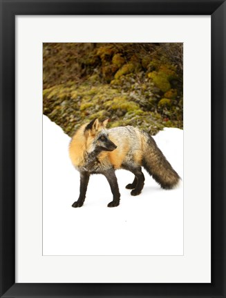 Framed Fluffy Critter Against Mountainside Print