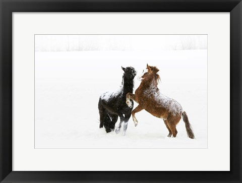 Framed Black and Brown Horse in Snow Print