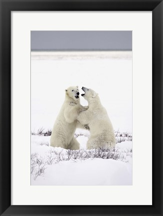 Framed Polar Bears Hugging Print