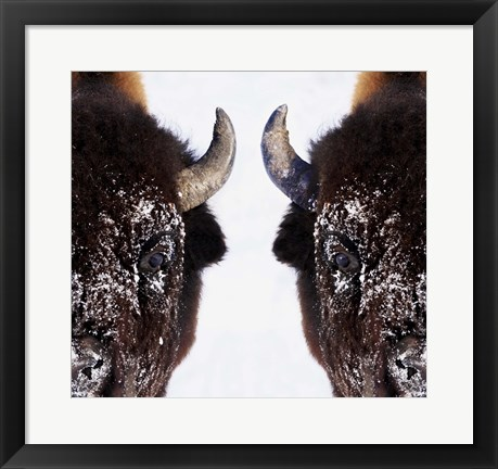 Framed Mirror Image of Snowy Bison Print