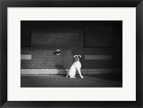 Framed White Dog Against Brick Wall Print
