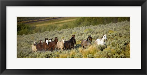 Framed Horses Running through Weedy Field Print