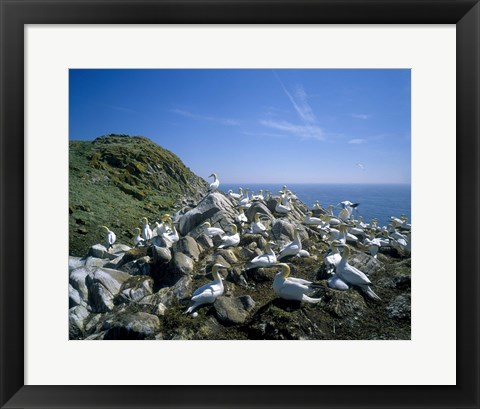 Framed Flock of Geese on Mountain Print