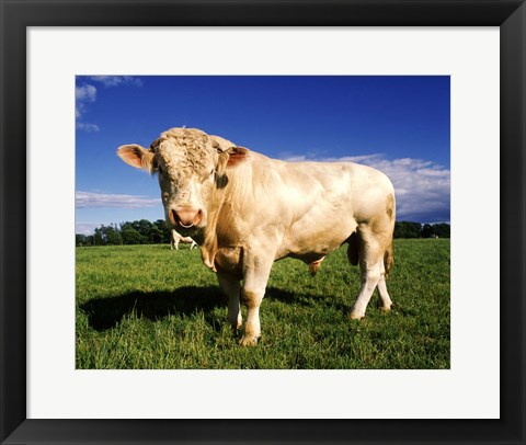 Framed Brown Cow in Field Print