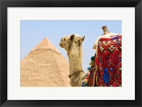 Framed Close Up of Camel and Pyramid Print