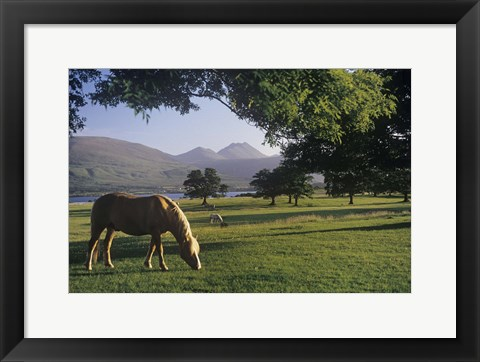 Framed Horses in a Field by a Lake Print