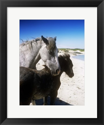 Framed Close Up of Horses on a Beach Print