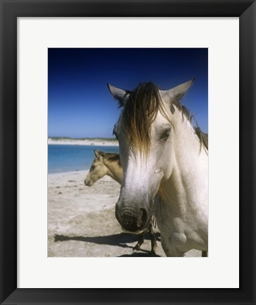 Framed Single Horse on Beach Print