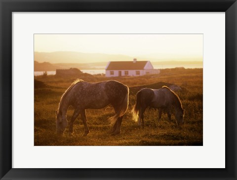 Framed Horses Grazing at Sunset Print