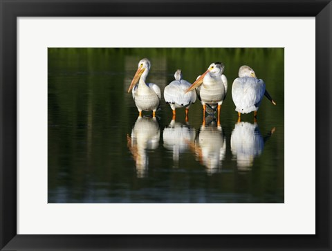 Framed Geese in the Lake Print