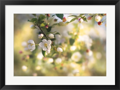 Framed Blush Blossoms I Print