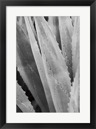 Framed Abstract Agava IV Print
