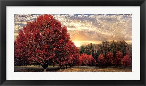 Framed Crimson Trees Print