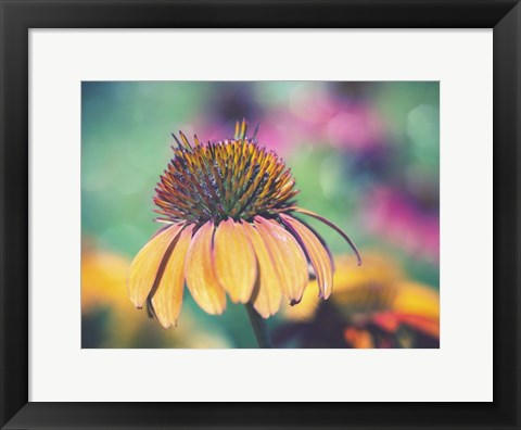 Framed Mellow Yellows I Print