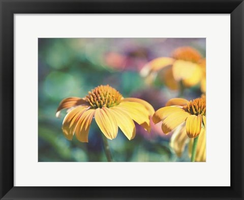 Framed Mellow Yellows II Print