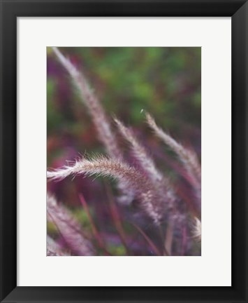 Framed Purple Plumes I Print