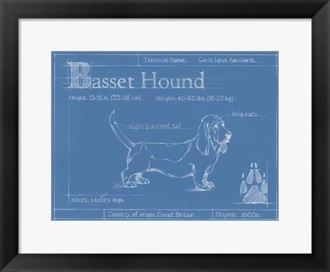 Framed Blueprint Basset Hound Print
