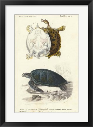 Framed Antique Turtle Duo I Print