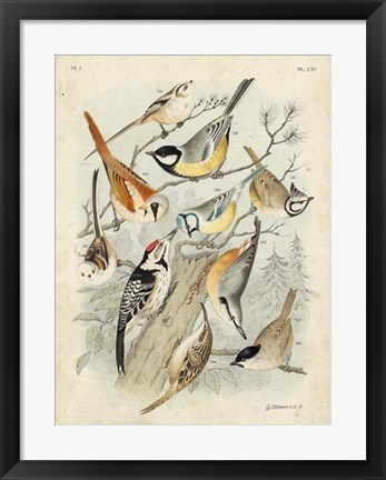 Framed Gathering of Birds II Print