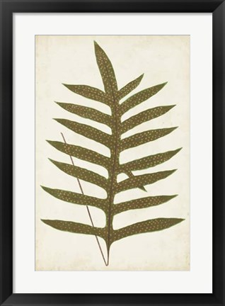 Framed Fern Family VIII Print
