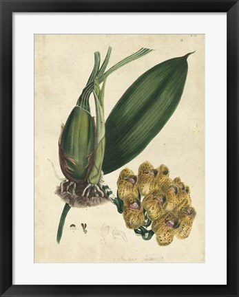 Framed Sophisticated Orchid I Print