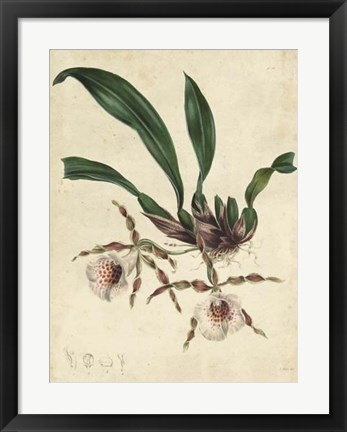 Framed Sophisticated Orchid II Print