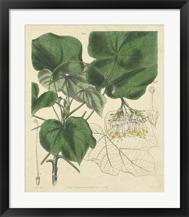 Framed Curtis Leaves & Blooms I Print