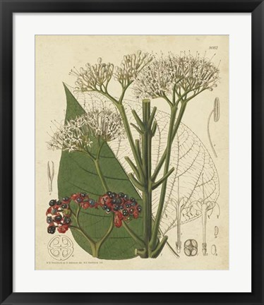 Framed Curtis Leaves & Blooms II Print