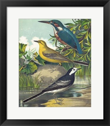 Framed King-fisher & Wagtails Print