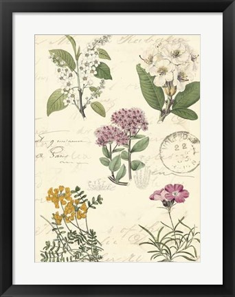 Framed Botanical Journal II Print