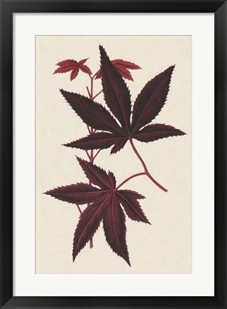 Framed Japanese Maple Leaves I Print