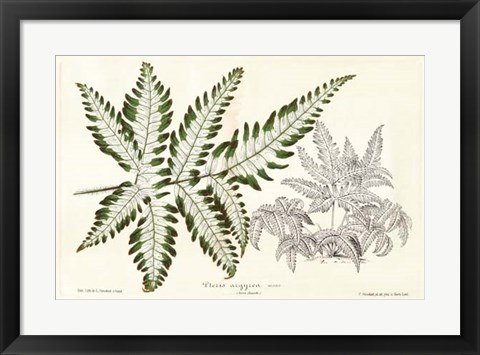Framed Fern Leaf Foliage II Print