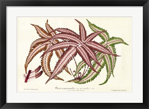Framed Fern Leaf Foliage III Print