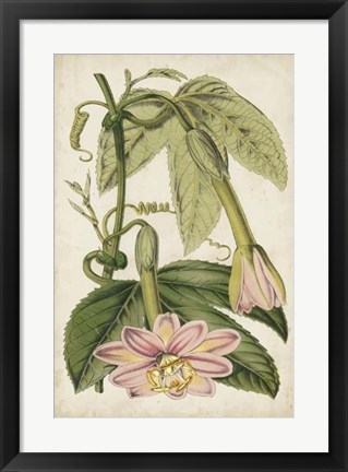 Framed Passion Flower Botanical Print